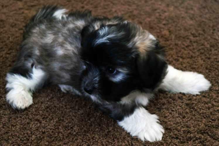 Renoir (Pup #1)